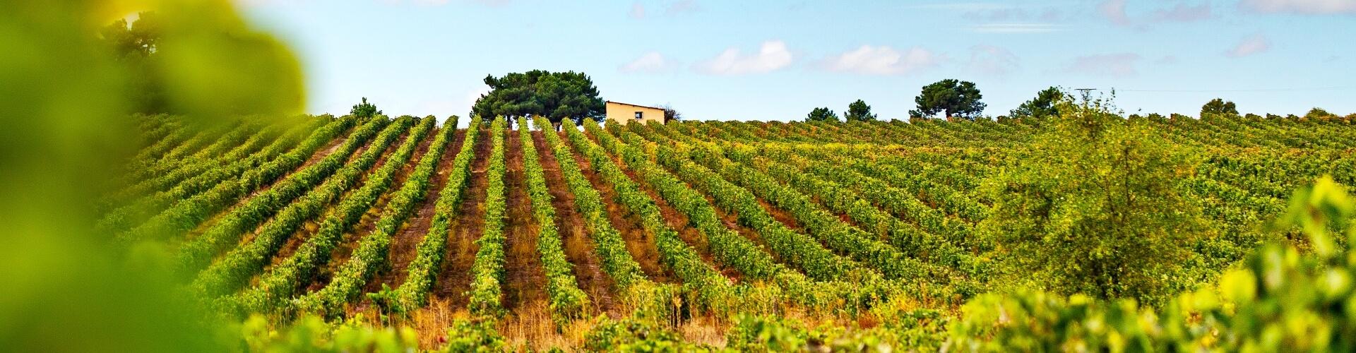 Slider viñedos